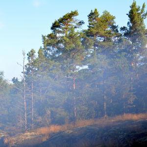 Brandrök i skogen.