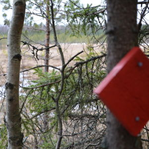kurjenrahka nationalpark, savojärvi rundslinga