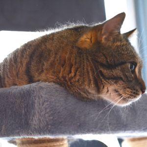 Katt i Tolkis katthus.