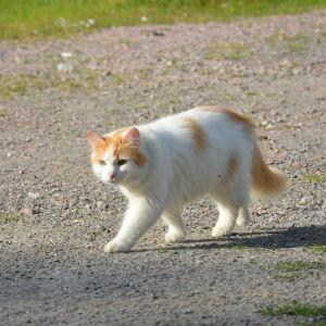 En av katterna på djurhemmet i Barösund.
