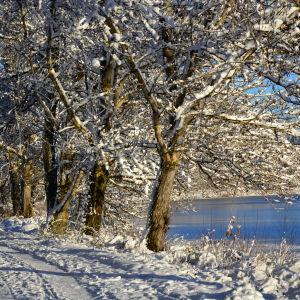 Vinterpromenad i Vasa.