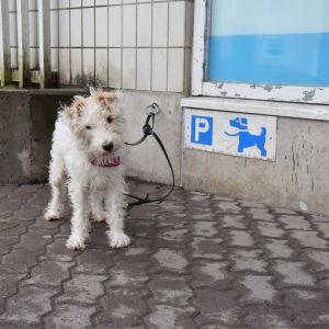 Hund lämnad utanför butik