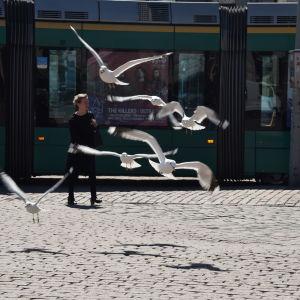 Glupska måsar flyger runt på Esplanaden.