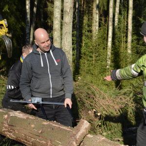 Två män mäter en avverkad trädstam.