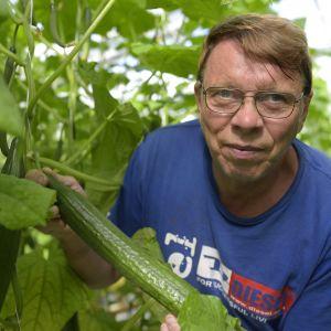 Martin Westerberg har odlat gurka i Yttermark i 40 år.