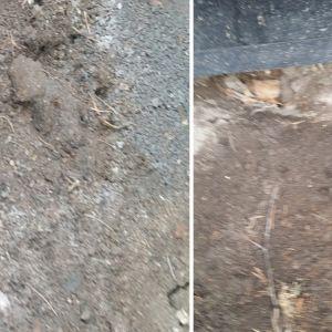 Rosita Karlsson upptäckte de här spåren under Kattsunds torpet i Tolkis. På den ena bilden syns spår av avföring och på den andra bilden spår av en tass. Vem håller till under huset?