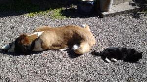 En hund och en katt ligger bredvid varandra.