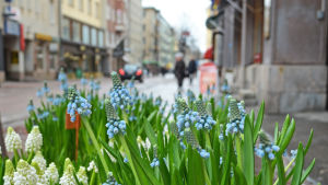Blombutik på stpra Robertsgatan