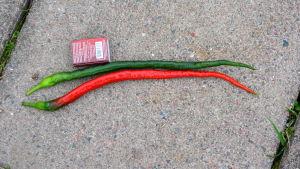 Finlands längsta chili är 29,3 cm lång.