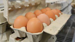 Tio närproducerade ägg i en äggkartong.