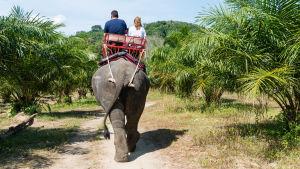 Ett par sitter med ryggen till på en elefantrygg. Elefanten går på en stig mellan gröna palmer.