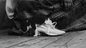 Kattunge i sidensko