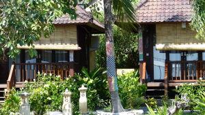 Ett träd där stammen är beklädd med tyg. Bali. Visar att trädet är heligt.