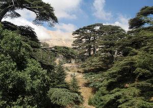 Setrimetsikkö Pohjois-Libanoni vuorilla