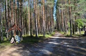Metsätie Sandarmohissa