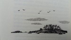 teckning av ö av Tove Jansson