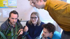En kvartett från Akademen tar ton från telefon och sitter på huk med koncentrerade blickar vid några krukväxter.