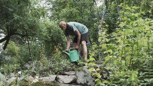 Puutarhuri Esa Kallio kastelee kastelukannulla tiikerinliljojen taimia pengermällä Hörtsänän arboretumissa Orivedellä, taustalla pensaita ja puita.