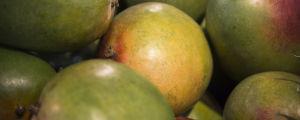 Mangofrukter.