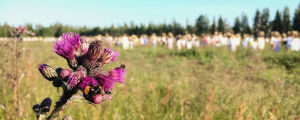 Violetti ohdake, jossa ampiaisia, taustalla pellolla epätarkkana Hiljaisen kansan hahmoja.