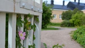 De gamla sjukhusbyggnaderna på Själö.