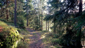 skogsvy