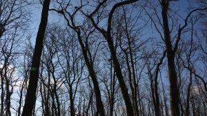 träd på metgrundet utan skarvbon i sig.