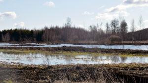 En våtmark. I bakgrunden syns skog.