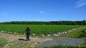 Anders Lång framför ett jordgubbsfält.