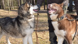 Två hundar.