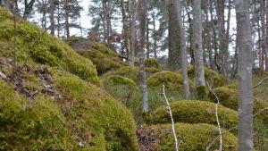 Mossbeklädda stenar