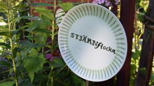 Grön och vit assiett på pinne i blomrabatt med texten 'Stjärnflocka' skriven tvärsöver.