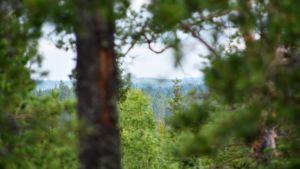 Utsikten från Tenaberget i Liljendal.