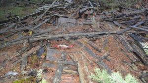 Spillror av manskapsbarack för tyska soldater på Hangö udd.