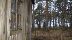 Tysk manskapsbarack på Tulludden på Hangö udd med utsikt mot norr.