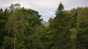 Näse gård i Borgå syns knappt bakom alla träd.