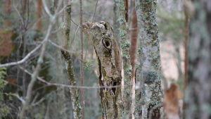 Ett gammalt träd med hål i