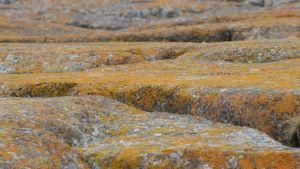 Keltajäkäläisiä kallioita Märketin majakalla
