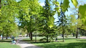 Grönskande löv i Kuppisparken i Åbo.