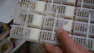 små plastlådor med levande bin och bidrottningar