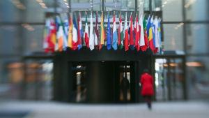 EU-länders flaggor i Bryssel i februari 2014