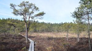 En spång leder över en mossa i Västerby friluftsområde.