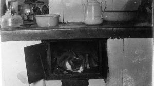 Katt i ugnen, foto av Edith Södergran.