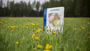 Aronmäki, Torppi tontti.