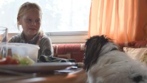 En hund och en flicka tittar på varandra vid ett matbord i en husvagn.