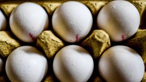 Äggkartong.