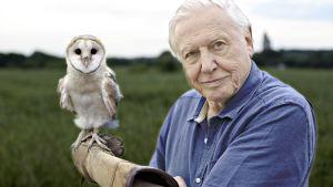 Prisma: Taivaan valloitus, kuvassa David Attenborough.
