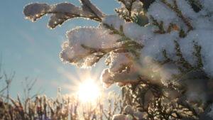 Sol på vintern.