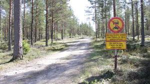 Just nu är området helt vanlig skog men en liten skogsväg.