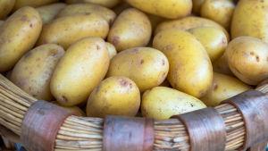 En färg med potatis.